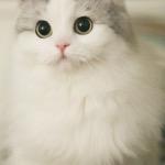 Alpha Kitty