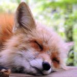 Foxygirl234