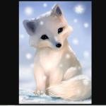 arctic foxy(cute)