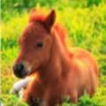 Babyhorse3000