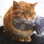 Bob.The.Cat