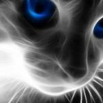 BRI-GUY THE CAT