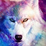 Emma(wolf)(needs love)
