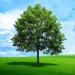 -Green Livez Matterz-