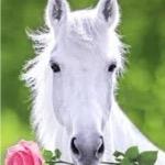 Horsegirl2707