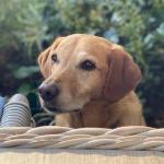 I love doggos