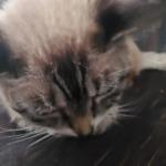I love Kitty cats