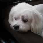 Kawaii-chan alpha meh dog