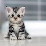 kitty (angle)