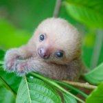 Xx sloth xX (single)