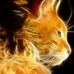 Kitty cat monster