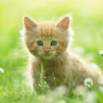 Kitty Nikki