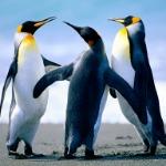 Bibidots(Penguin)