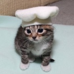 My cat as a chef 4 Halloween