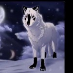 Nova (Wolf)