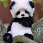 Pandagirlie13
