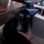 puppy-lover