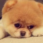 Puppyloverboy