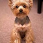 Peanut Butter Puppy