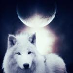 winter_moon_2005