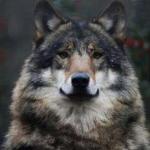 (Wolf boy)