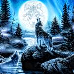 Wolfe(is bi)