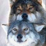 Wolfie(I luv u)